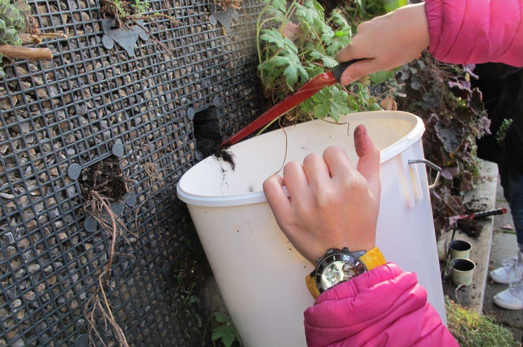 Nachsetzen von Pflanzen mit Schülerinnen und Schülern